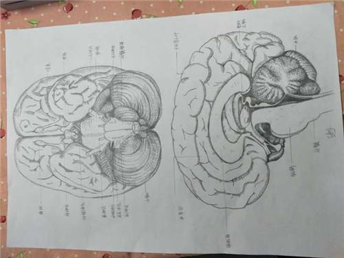 织学生参加全国解剖绘画大赛